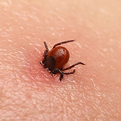 tick extermination and prevention southern MD
